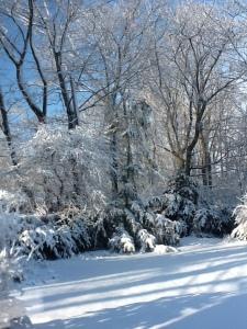 Winter 034