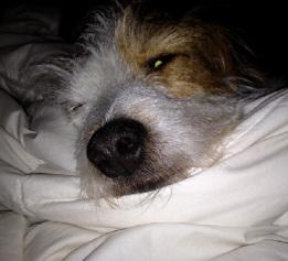 Sleepy boy 2