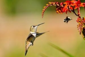 bird-bee