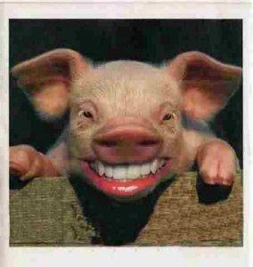 pig-smiles